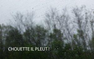 chouette-il-pleut