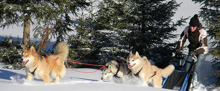 Excursion-nature-avec-des-chiens-de-traineau